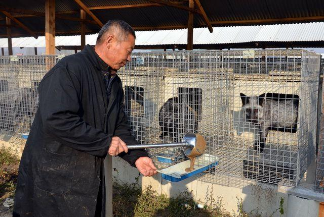 河北省昌黎县一家貉、貂养殖场。摄影/章轲
