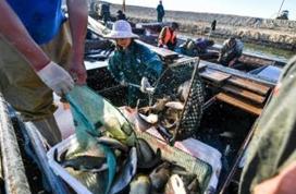 市场监管总局:禁售、禁食长江流域非法捕捞渔获物