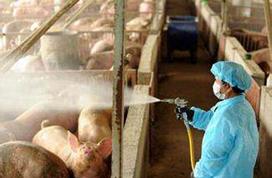 农业农村部:全面排查非法生产销售使用非洲猪瘟疫苗情况