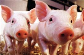 农业农村部称猪价将突破历史高点!公募显著加仓