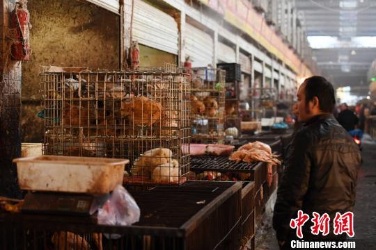 云南发现两起家禽H5N6亚型高致病性禽流感疫情
